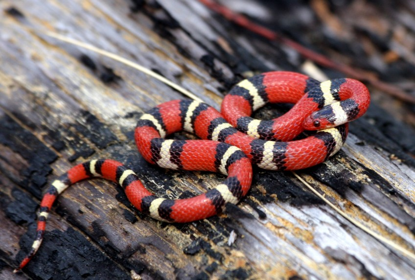 13 Beautiful and Colorful Small Snake Pets