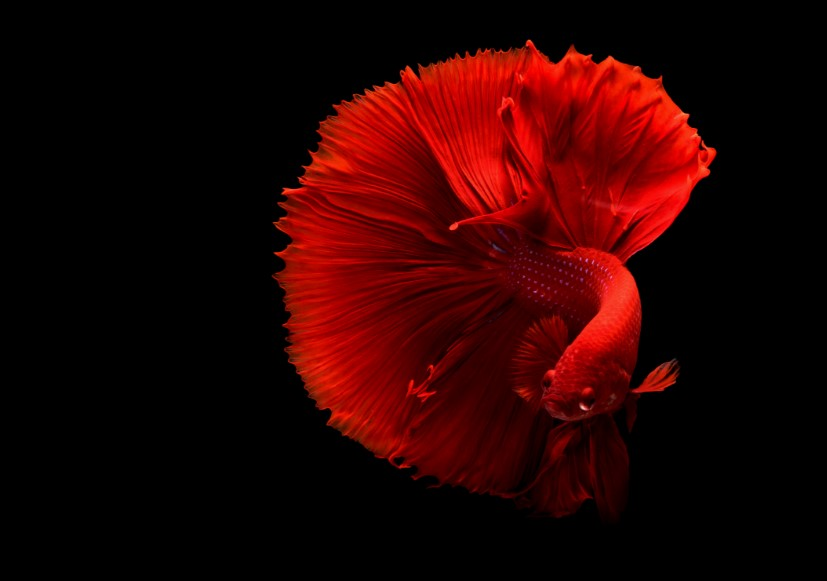 32 Amazingly Beautiful Red Animals You Need To See