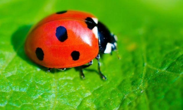 a list of beautiful animals with red colored : lady red bug