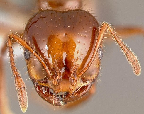 An Informative Guide To Ant Poison