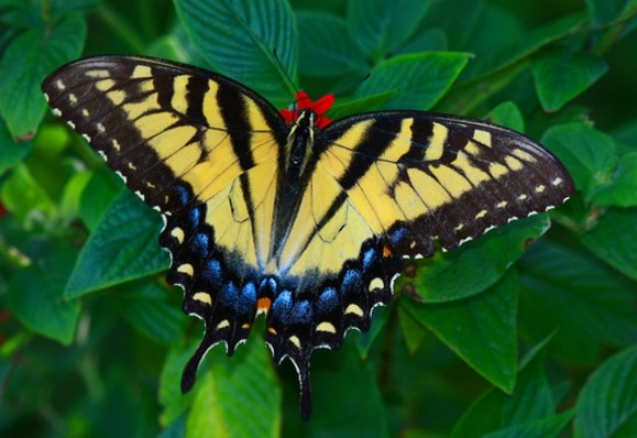 Different Type of butterfly