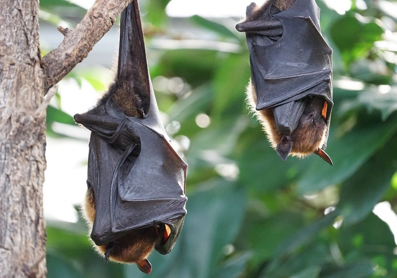 8 Common Types of Bats in the World