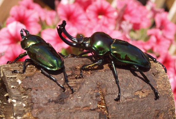 10 Different Types of Beetles