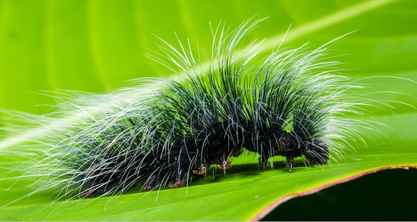9 Different Types of Caterpillars