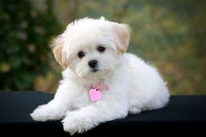 7 Cutest Dog Breeds in the World