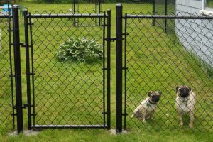 10 Best Dog Fence Ideas